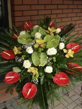 Wiązanka pogrzebowa z kwiatów żywych, wielkość: bardzo duża, anthurium czerwone (Tropico), anthurium zielone, róża kremowa (Avalanche), storczyk złoty (Cymbidium), zieleń dekoracyjna, podkład jodłowy.