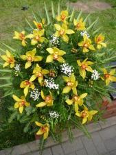 Wiązanka pogrzebowa z kwiatów żywych, wielkość: duża, storczyki złote (Cymbidium), liść palmy, zieleń dekoracyjna, podkład jodłowy, szarfa jedwabna szer. 7 cm druk cyfrowy.