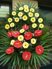 Wieniec pogrzebowy z żywych kwiatów, wielkość: duży, gerbery kremowe, anthurium czerwone, liść palmy, podkład jodłowy, zieleń dekoracyjna.