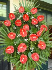 Wieniec z żywych kwiatów, wielkość: duży, anthurium czerwone, liść palmy, podkład jodłowy, zieleń dekoracyjna.