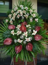 Wieniec z żywych kwiatów, wielkość: duży, storczyki białe (Cymbidium), anthurium bordowe (Safari), liść palmy, podkład jodłowy, zieleń dekoracyjna.