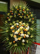 Wieniec pogrzebowy z żywych kwiatów, wielkość: bardzo duży, storczyki zielone (Cymbidium), tulipany czerwono-żółte, róże kremowe (Savita), chryzantema biała (Bacardi), liść palmy, podkład jodłowy, zieleń dekoracyjna.