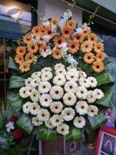 Wieniec pogrzebowy z kwiatów żywych, wielkość: bardzo duży, gerbery żółte i kremowe, storczyki białe (Dendrobium), wykończenie zaginanymi liśćmi Aspidistry i Cordyliny, podkład jodłowy, zieleń dekoracyjna.