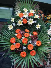 Wieniec pogrzebowy z kwiatów żywych, wielkość: średni, gerbery herbaciane, lilie kremowe, anthurium brązowe (Choco), liść palmy, podkład jodłowy, zieleń dekoracyjna.